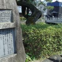 瑠璃光寺:山口市:梅の花