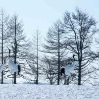 釧路発11時6分 SL冬の湿原号 (2月9日)