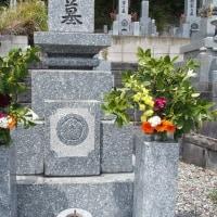 今月の墓参りと庭の桜。