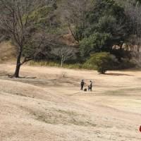 大高緑地公園の梅まつり!