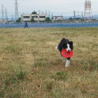 Japan Athlete Dog Club 練習会