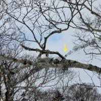 雪山散歩 ~ オコタンぺ山
