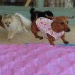 梅雨明けしたね!夏本番!!  犬のしつけ教室&犬の幼稚園@アロハドギー