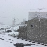 今年二度目の彦根の雪。