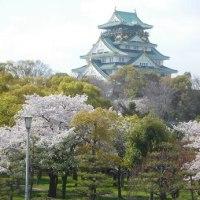 大阪城公園のサクラとホテルのビュッフェ!
