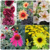 2016年庭の花まとめ