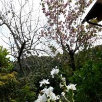 小野なな nanaono  NANAONO   大ドジでしたがなんとか乗り越えました。