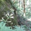 文殊山(60-61.292)