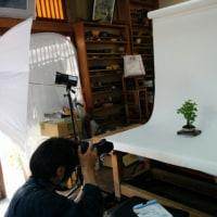 昨日は、盆栽の本の撮影日でした。