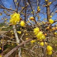 立春の播磨中央公園
