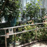 20170419 神代植物公園の温室 05 Fujifilm-Digtal Camera X100T