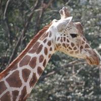 東山動物園80周年