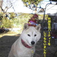 ♪ゆず14歳、誕生日パーティー♪