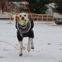 ゆっきーと雪遊び♪