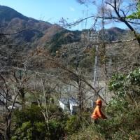 檜原村ふるさとの森-12月②
