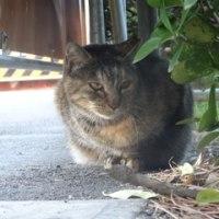 どうぶつ基金 さくら猫さんたち、それぞれの帰還。と、給餌。