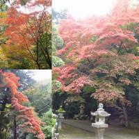 紅葉の箕面と三色彩道