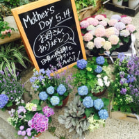 mothers day 青