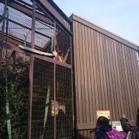 上野動物園と桜