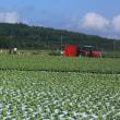 野辺山高原 朝採り野菜