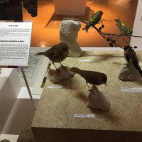 ブールジュ国際学会「G.サンドと自然科学」の報告