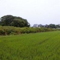 今日の田圃・畑