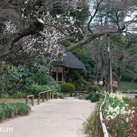 大名庭園、静けさ満喫。