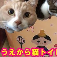 猫トイレを模様替えしてみた♪【猫日記こむぎ&だいず】2017.02.20