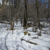 鹿の足跡が獣道になっています。