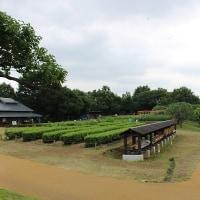 夏の昭和記念公園♪