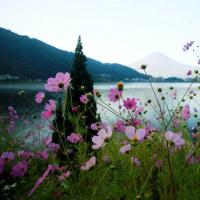 祝・12歳のベルジアングリフォン~富士山