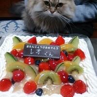 レオ4歳の誕生日