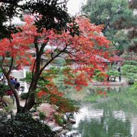 2016・日本庭園(縮景園)の紅葉 その5