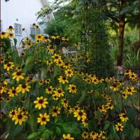雨を待つ庭