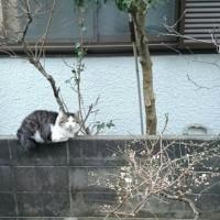 どこから来た猫だ