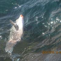 釣り人生最大の強風。