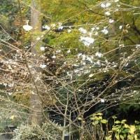 「東慶寺」の紅葉(続き)
