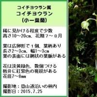 湯ノ丸山系のラン10