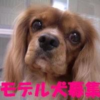 モデル犬 大募集中です!