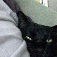 猫と私と糖尿病と腎不全。(2)