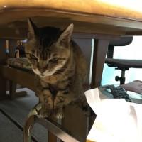テーブルの下に避難。