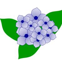 2種類の紫陽花イラストの描き方