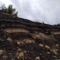 石炭の露頭
