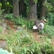 上野動物園 オオワシ