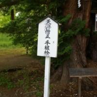 福島県会津美里町、伊佐須美神社の藤・桧・紅葉です!!