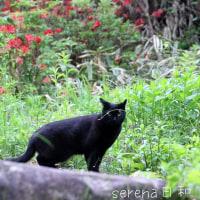 黒猫の庭~ひとりの夜~