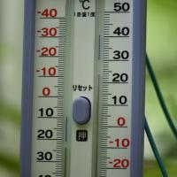 何て言うランでしょうか?  温室内で、温風フアンとヒーターで保温している。ビックリですわ