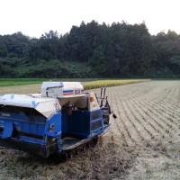 やっと稲刈り、乾燥、籾摺りが終了