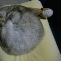 低反発枕を貰ったでちっ!