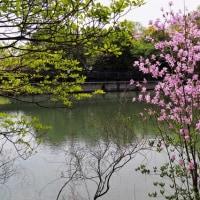 集まりました・・池の風景
